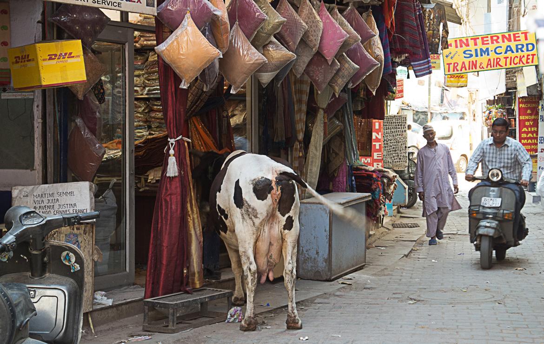 Reisefotografie in Delhi